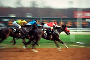 racing-meds.com horse camel greyhound eagle